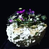 design in struttura fiorista bianchi